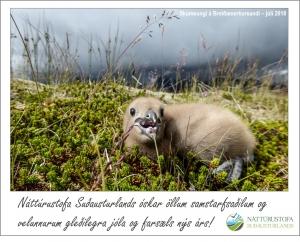 Jólakveðja frá Náttúrustofu Suðausturlands 2018