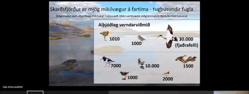 Dr. Lilja Jóhannesdóttir sérfræðingur hjá Náttúrustofu Suðausturlands flytur erindi sitt um Skarðsfjörð á vinnustofum um mögulega friðlýsingu.